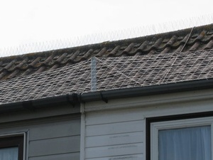 Getting Rid Of Pigeons Roofs